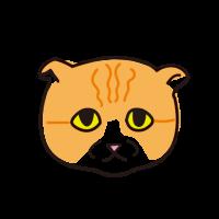 ブサイクな猫 Buzzy cat ♂