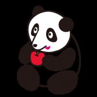 かわいい仔パンダ Cute baby panda