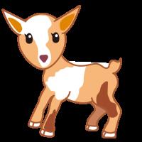 かわいい子ヤギ 子山羊 Cute baby goat