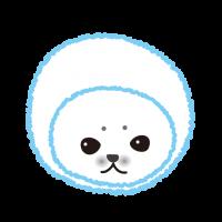 かわいいあざらしの赤ちゃん|Cute SEALS  baby