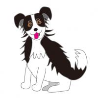 かわいいボーダーコリー|Cute border collie