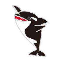 殺し屋シャチ Orcinus orca Killer whale